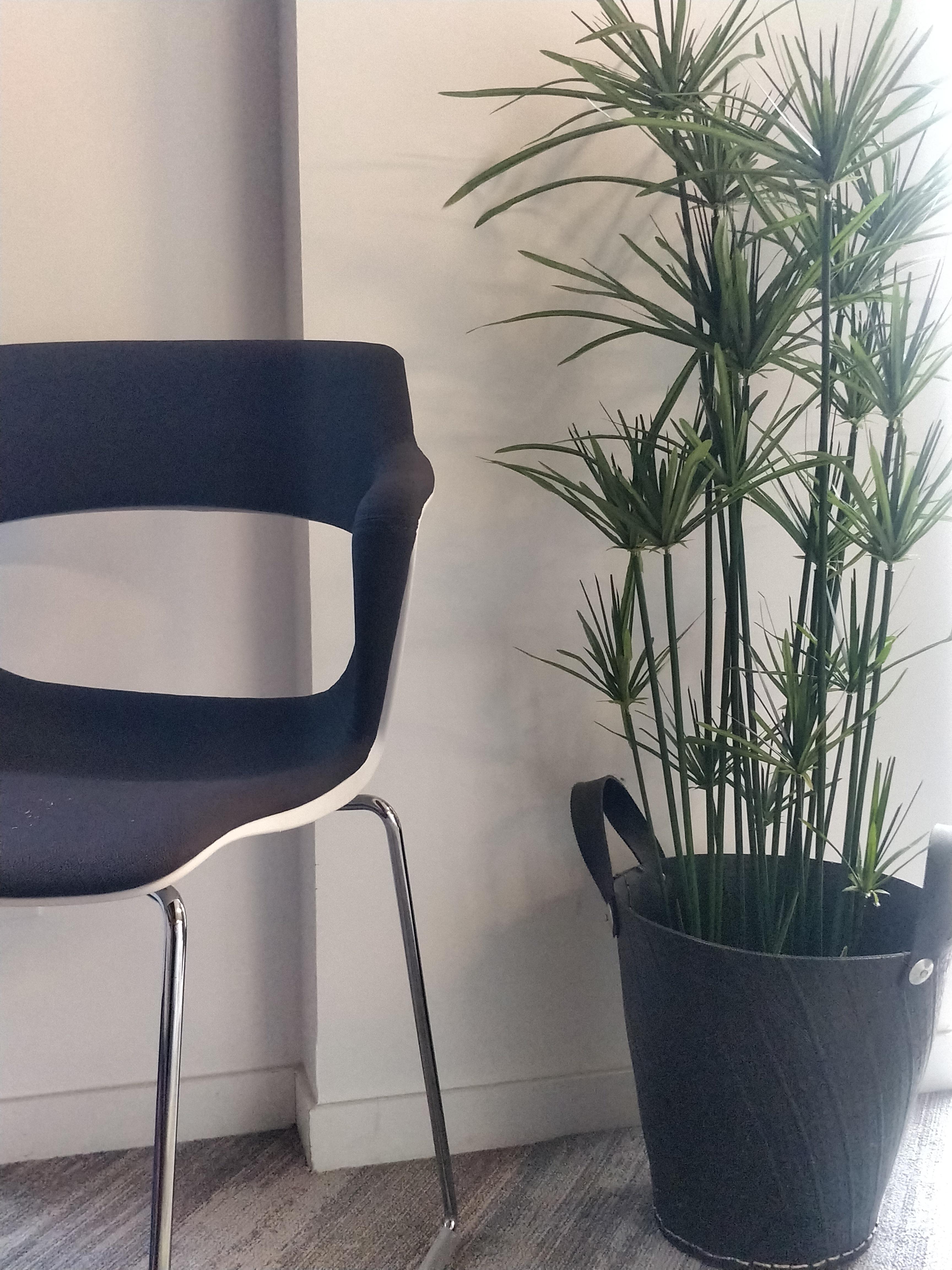 plante decoration bureau accessoire (1)