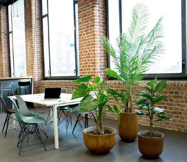 plante decoration bureau accessoire (4)