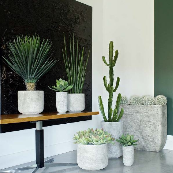 plante decoration bureau accessoire (5)